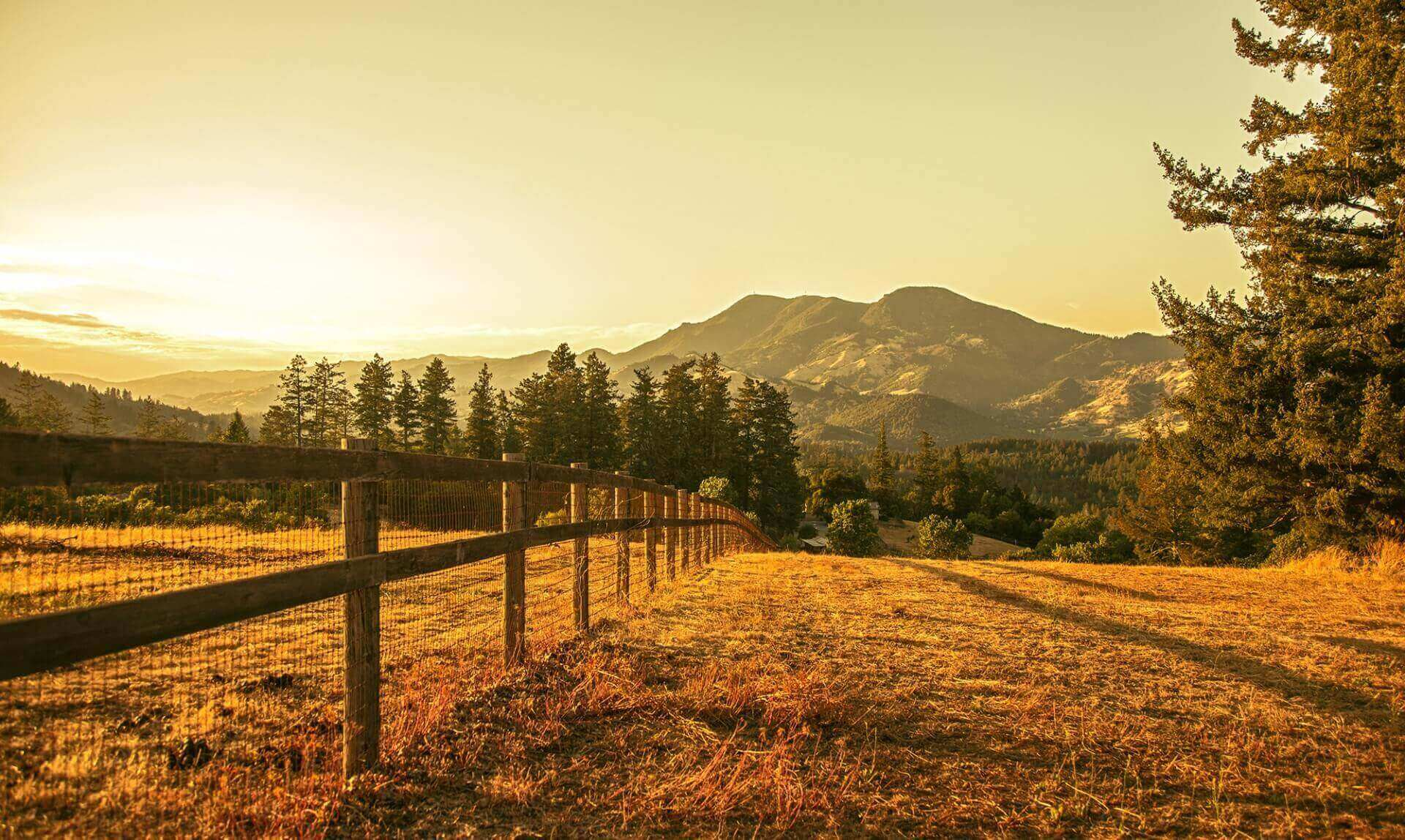 Vineyard Landscape Facing Mountain During Sunset