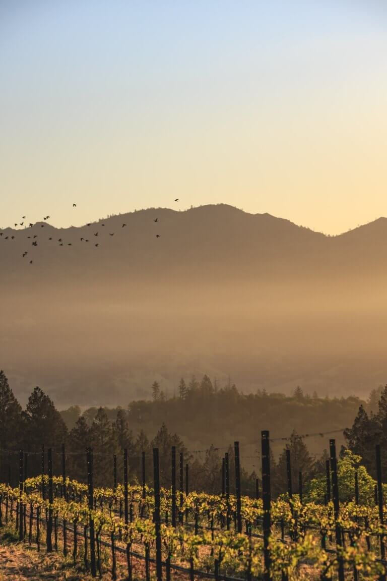 Birds Flying Over Vineyard During Sunset