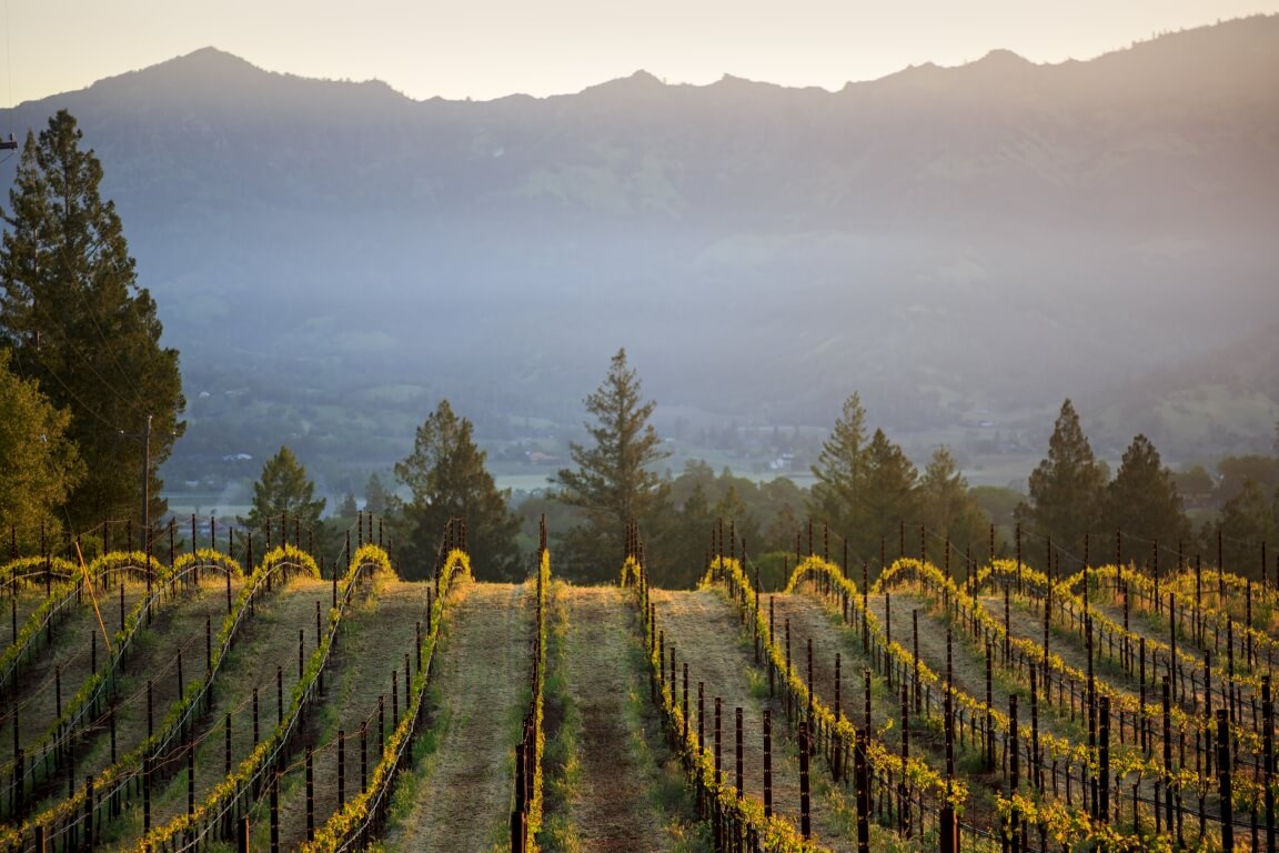 Vineyard's Lush Landscape During Sunset