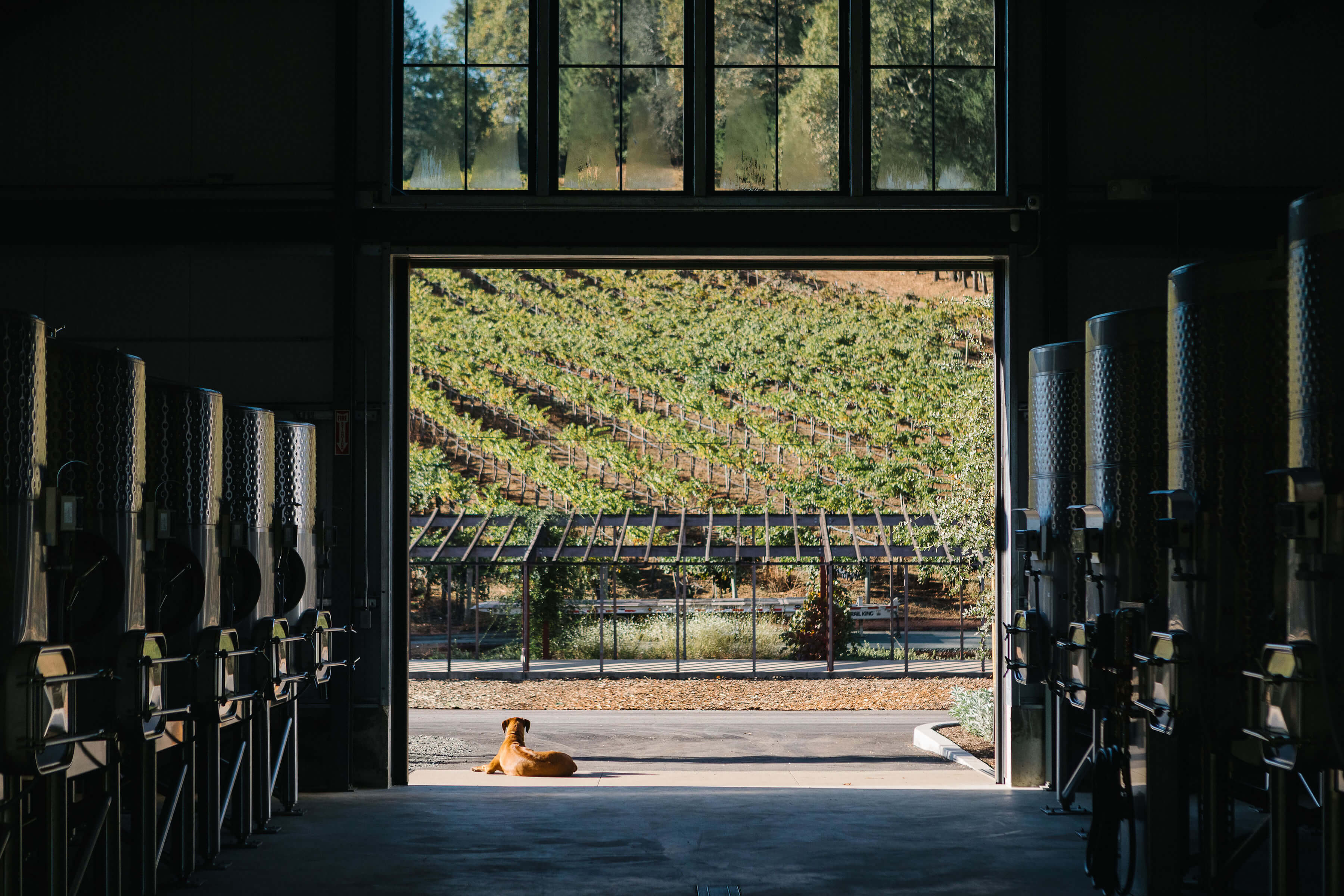 Wine Making Room with Cute Pup in Doorway